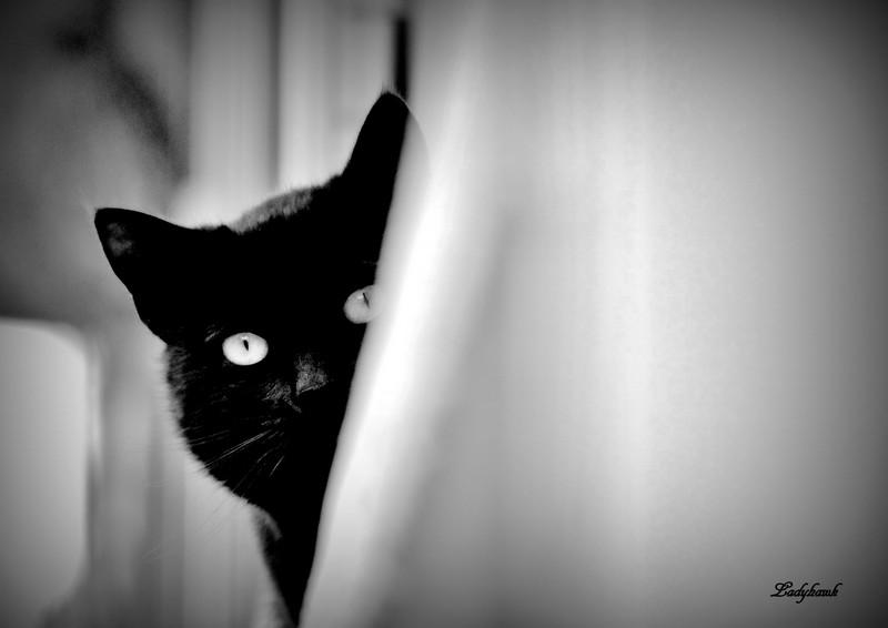 le chat noir Img_2711