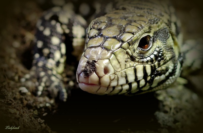 reptile Img_4010