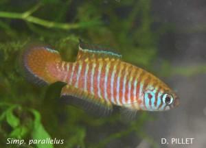 Petites nouvelles de ma fish room... - Page 6 S_para10