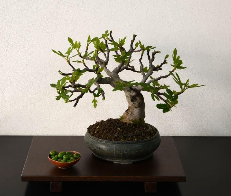 Ficus-Carica - Pagina 9 09-04-10