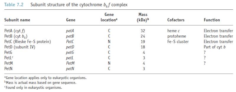 Cytochrome bc complexes, origin, biosynthesis etc. Cytoch11