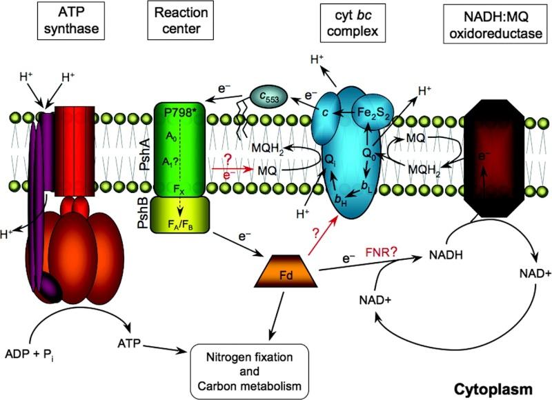 Origin and evolution of photosynthesis F6_lar10