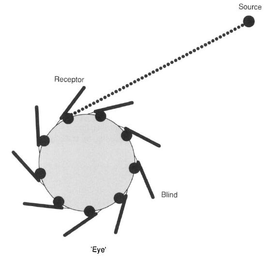Principle of Design of a Cellular Eye Microt16