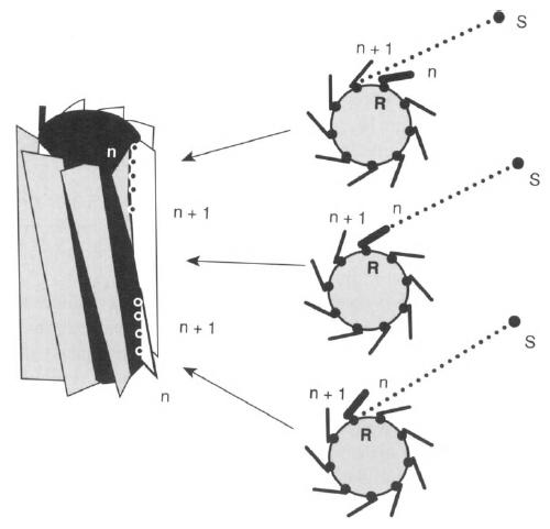Principle of Design of a Cellular Eye Microt20