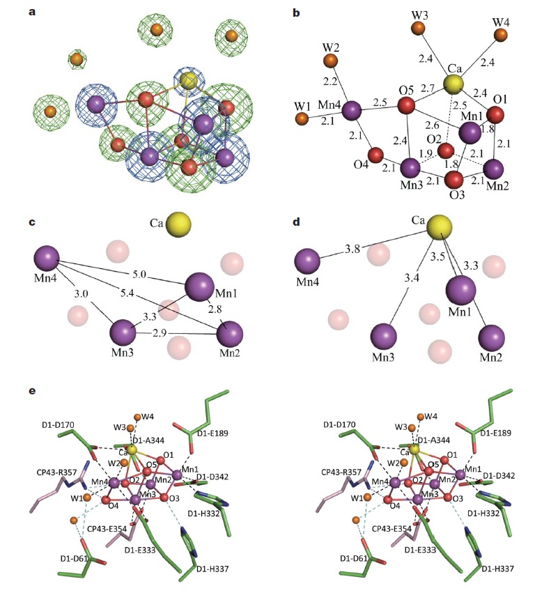 The oxygen evolving complex (OEC) of photosystem II is irreducible complex. Mn4cao10