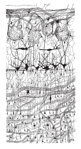 Neural development Nerve_10