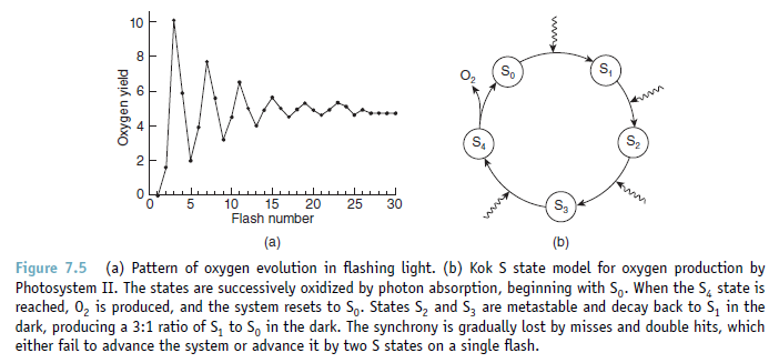 The oxygen evolving complex (OEC) of photosystem II is irreducible complex. Oxygen10