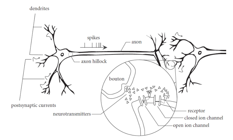 How to explain best the origin and emergence of the brain ?  The_ma10