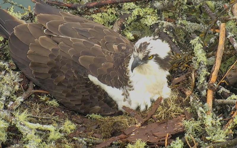 Wildtier-Livecams - Seite 26 Bildsc15