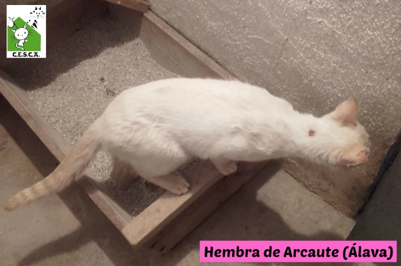 CESCA. La unión de Apa Sos Vitoria y Esperanza Felina por los gatos callejeros de Álava - Página 6 111