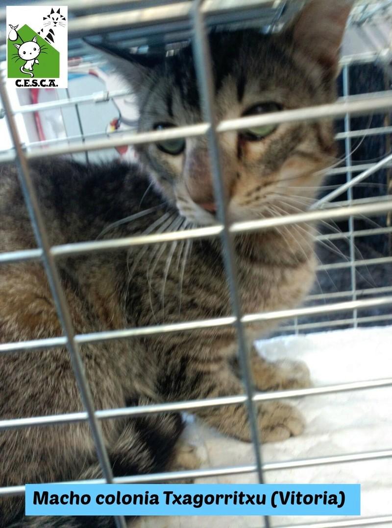 CESCA. La unión de Apa Sos Vitoria y Esperanza Felina por los gatos callejeros de Álava - Página 7 13052011