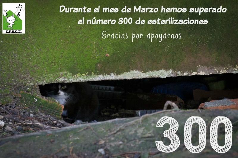 CESCA. La unión de Apa Sos Vitoria y Esperanza Felina por los gatos callejeros de Álava - Página 6 30010