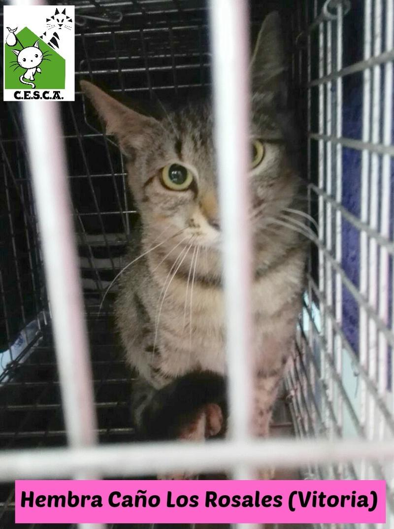 CESCA. La unión de Apa Sos Vitoria y Esperanza Felina por los gatos callejeros de Álava - Página 7 Hembra10