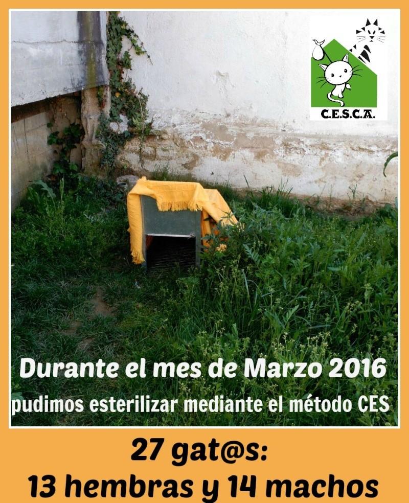 CESCA. La unión de Apa Sos Vitoria y Esperanza Felina por los gatos callejeros de Álava - Página 6 Marzo_11