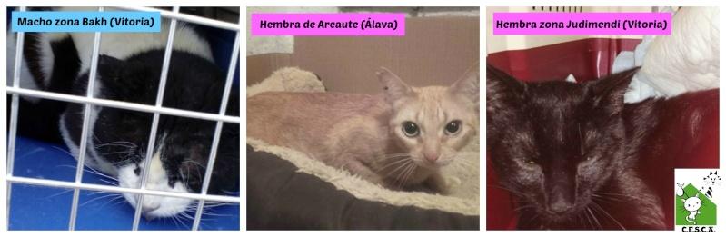 CESCA. La unión de Apa Sos Vitoria y Esperanza Felina por los gatos callejeros de Álava - Página 6 Picmon10
