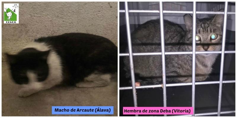 CESCA. La unión de Apa Sos Vitoria y Esperanza Felina por los gatos callejeros de Álava - Página 6 Picmon11