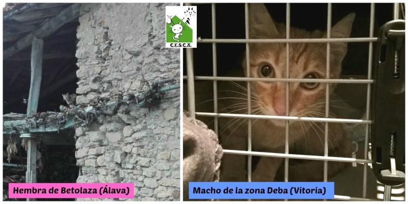 CESCA. La unión de Apa Sos Vitoria y Esperanza Felina por los gatos callejeros de Álava - Página 6 Picmon13