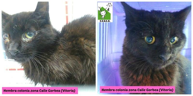 CESCA. La unión de Apa Sos Vitoria y Esperanza Felina por los gatos callejeros de Álava - Página 6 Picmon18