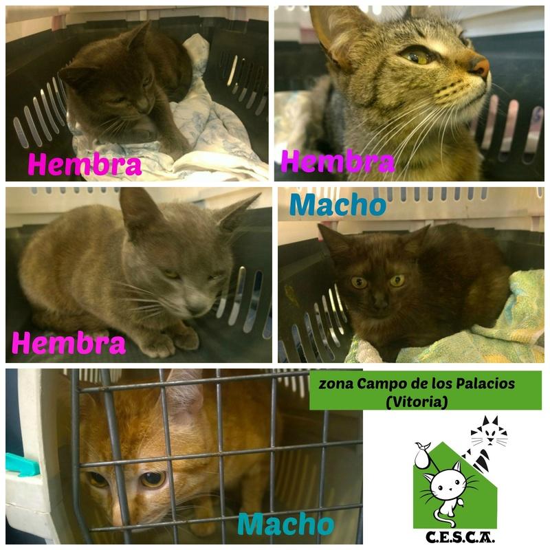 CESCA. La unión de Apa Sos Vitoria y Esperanza Felina por los gatos callejeros de Álava - Página 7 Picmon20
