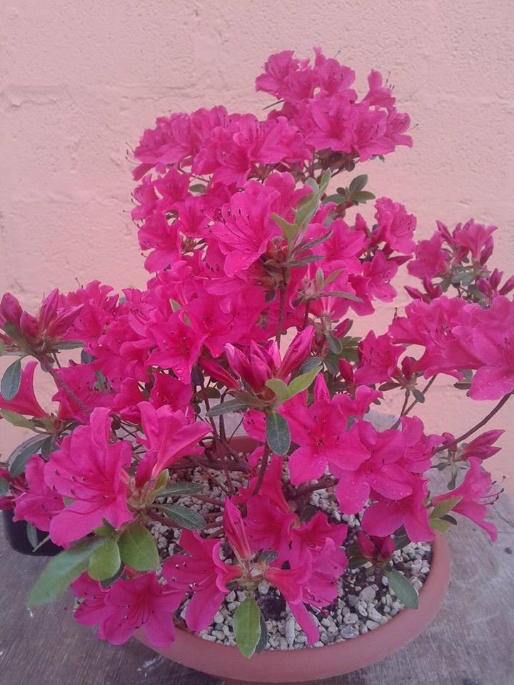 prime fioriture stagionali - Pagina 3 312