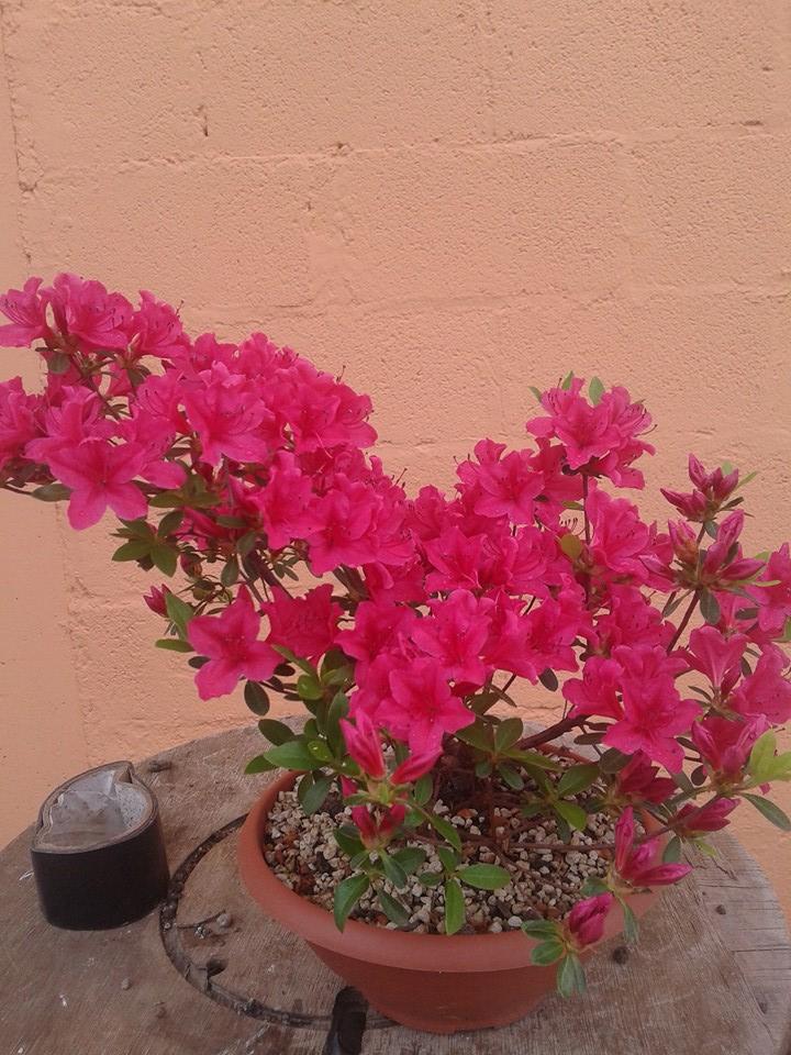 prime fioriture stagionali - Pagina 3 414
