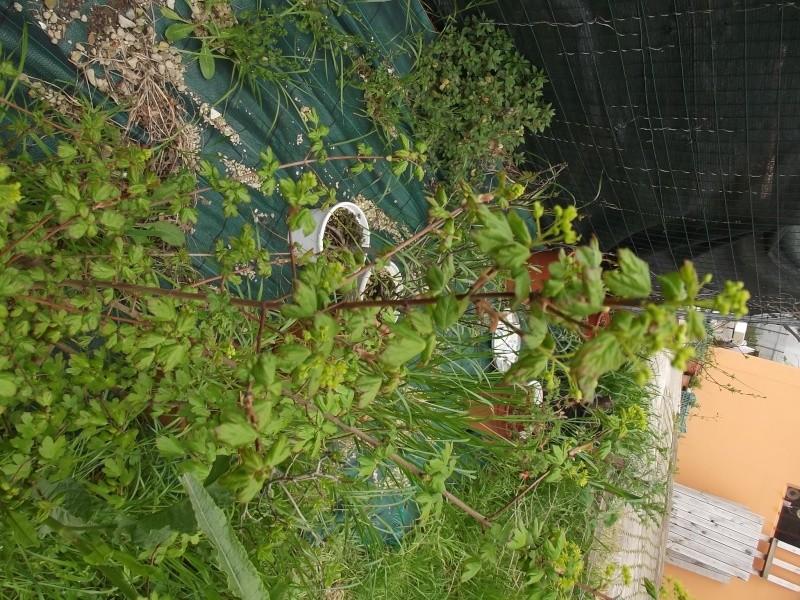 prime fioriture stagionali - Pagina 2 Dscf2011