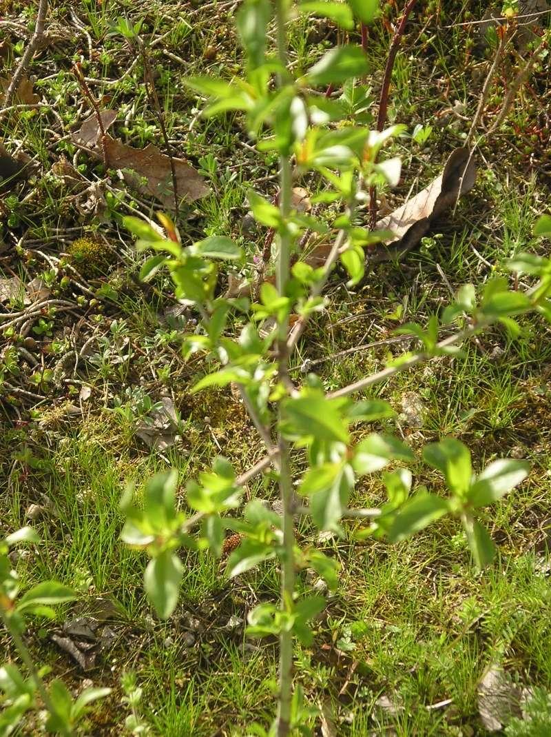 petit arbuste Imgp0017