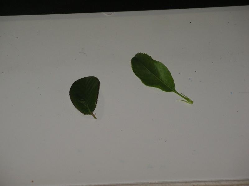 petit arbuste Imgp0021