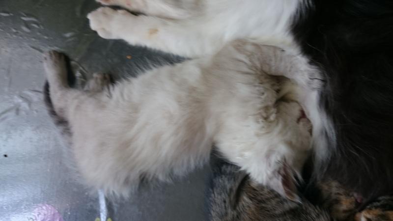 Loon, mon petit prince des chats :) Dsc_0211