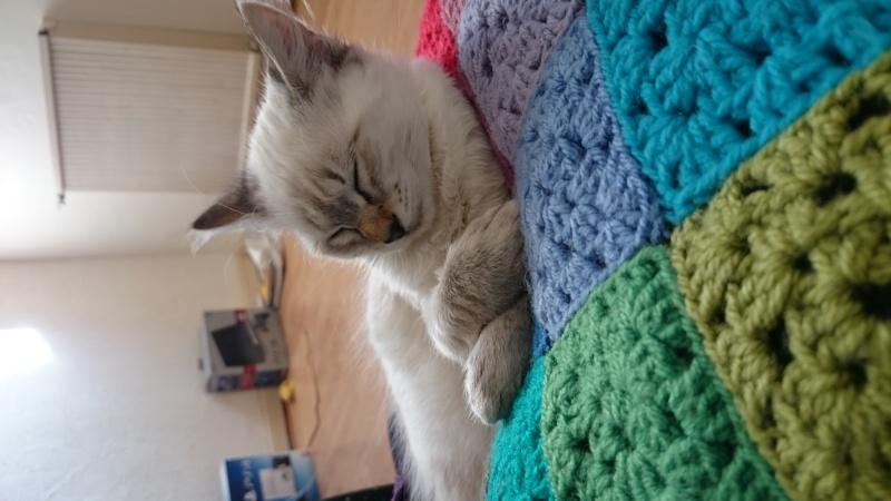 Loon, mon petit prince des chats :) Dsc_0310