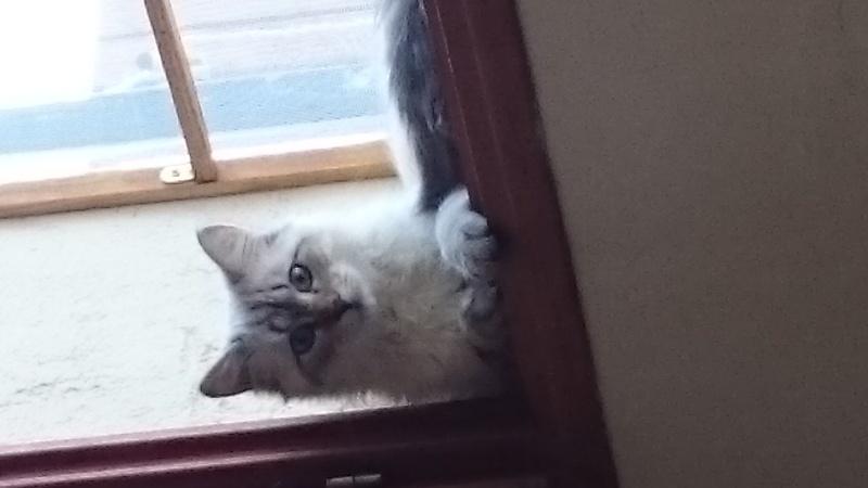 Loon, mon petit prince des chats :) Dsc_0411