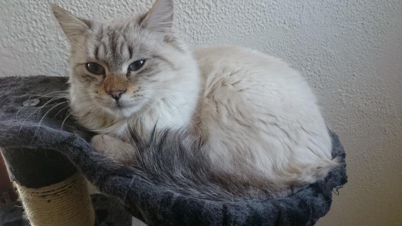 Loon, mon petit prince des chats :) Dsc_0413