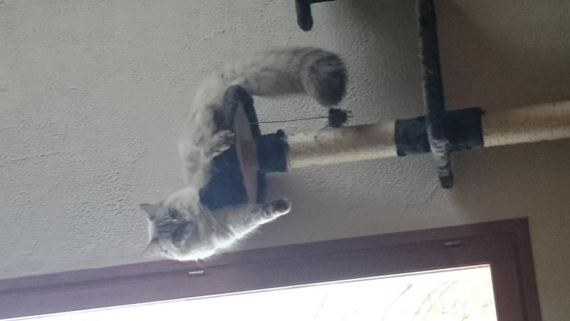 Loon, mon petit prince des chats :) Dsc_0510