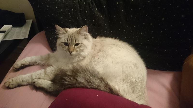 Loon, mon petit prince des chats :) Dsc_0512
