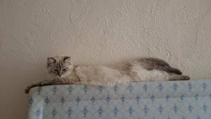 Loon, mon petit prince des chats :) Dsc_0623