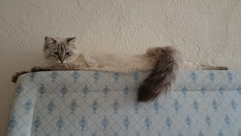 Loon, mon petit prince des chats :) Dsc_0624