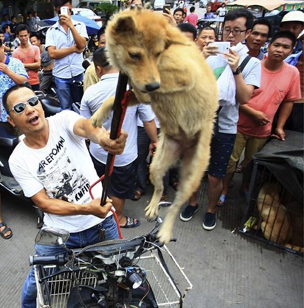 Contre la vente de viande de chien! Yulin-10