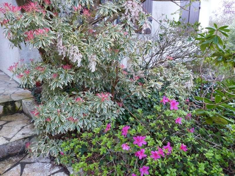 avril, jardin fébrile - Page 2 Azalea10