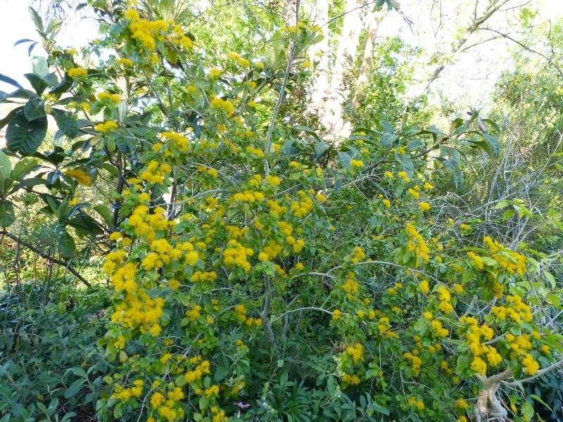 joli mois de mai, le jardin fait à son gré - Page 2 Azara_10
