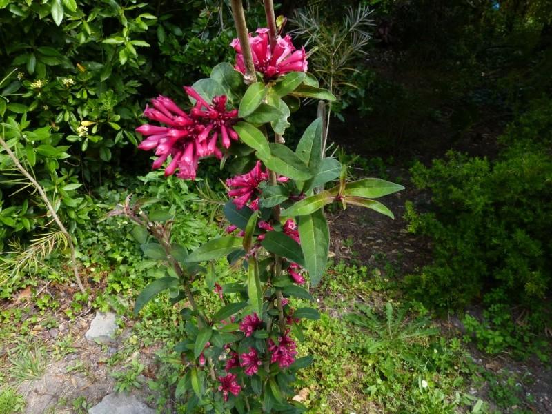 cadeaux du jardin, juin juin Cestru13