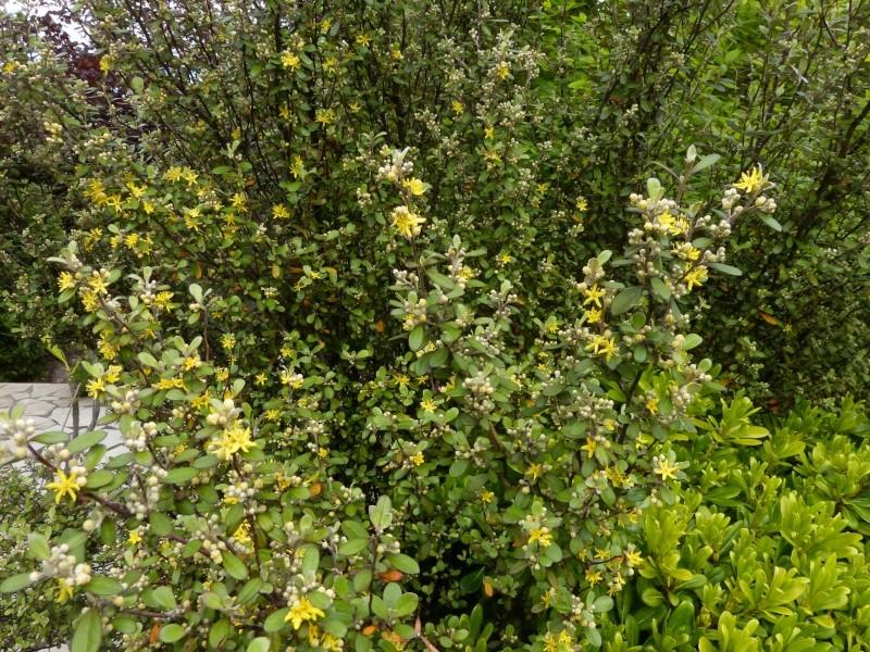 joli mois de mai, le jardin fait à son gré Coroki10