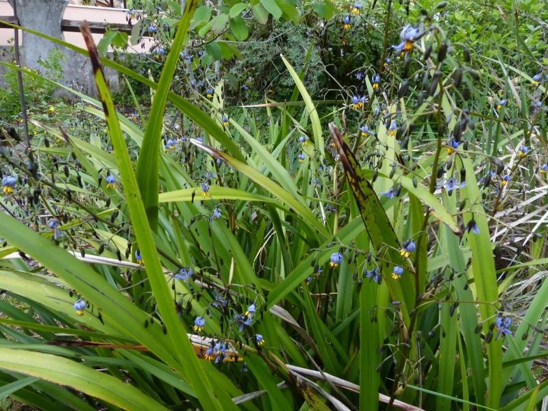 joli mois de mai, le jardin fait à son gré - Page 4 Dianel11