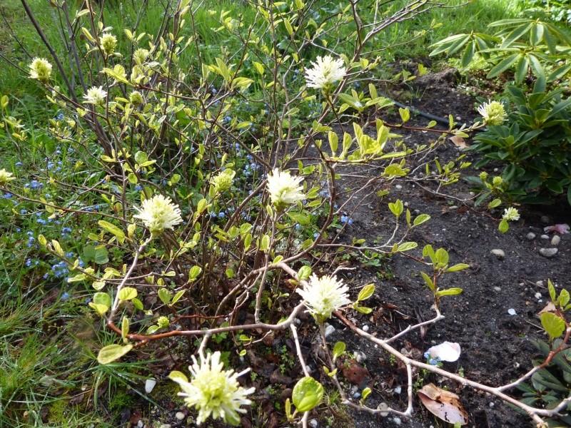 avril, jardin fébrile - Page 2 Fother10