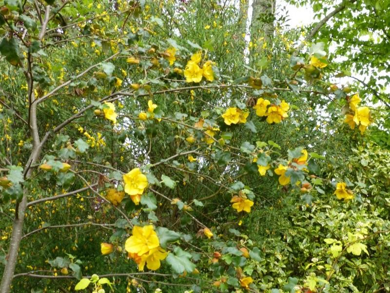 joli mois de mai, le jardin fait à son gré - Page 2 Fremon10