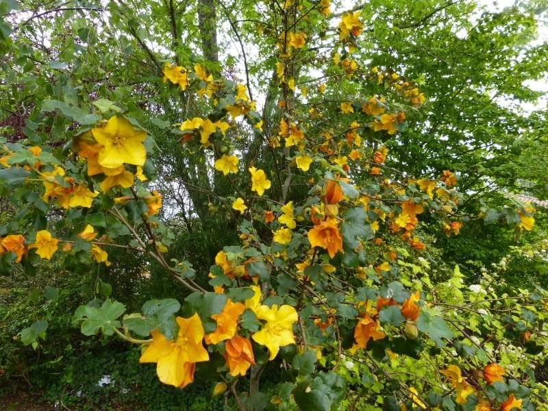 joli mois de mai, le jardin fait à son gré - Page 3 Fremon11