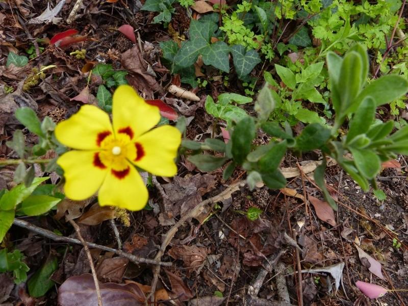joli mois de mai, le jardin fait à son gré - Page 2 Halimi10