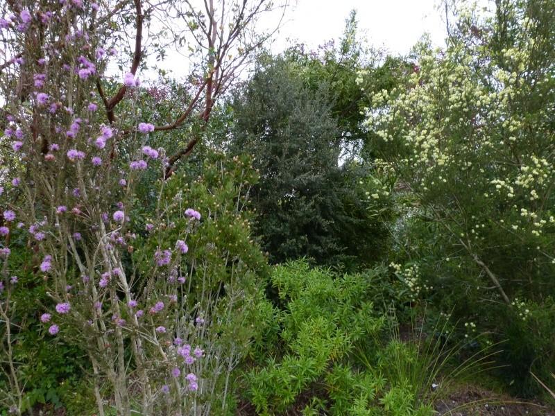 avril, jardin fébrile - Page 6 Melale20