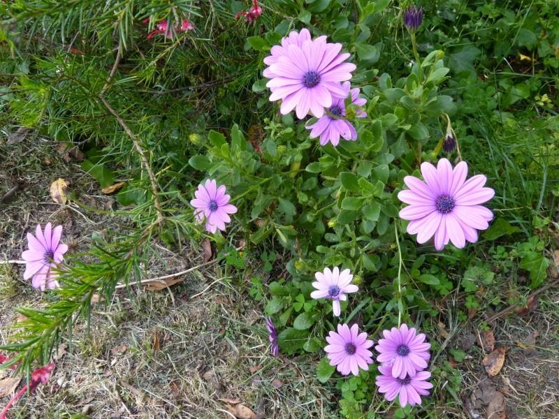 joli mois de mai, le jardin fait à son gré - Page 4 Osteos10