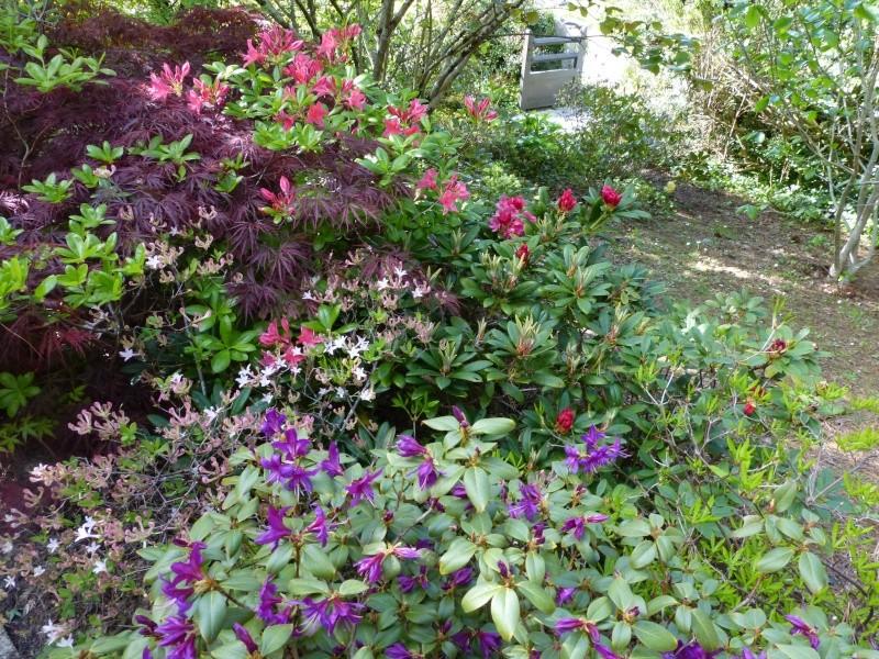 joli mois de mai, le jardin fait à son gré Rhodod38