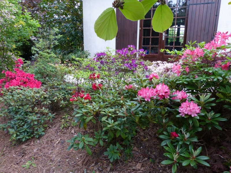 joli mois de mai, le jardin fait à son gré - Page 2 Rhodod48